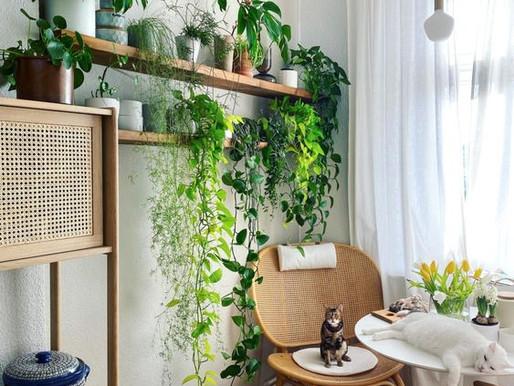 Decore com Plantas - Prateleiras Perfeitas