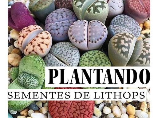 Plantando Sementes de Lithops