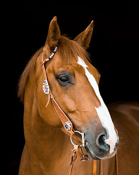 horse-3390256_1920.jpg
