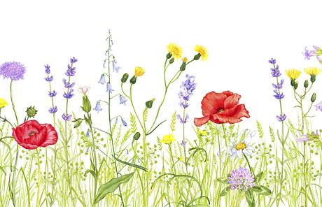 grass_long_flowering.png
