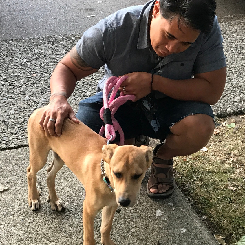 Guatemalan Rescue Dog
