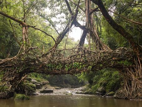 Exploring Meghalaya