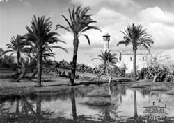 המסגד בלוד 1918, Australian War Memorial