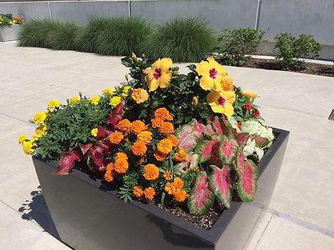 Image-Planter box.jpg