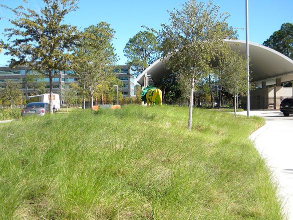 BP Park Grasses.JPG