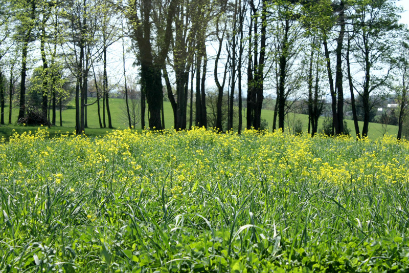 Pleasant View Rd Staunton Virginia - Mustard by Hannah Giriotti