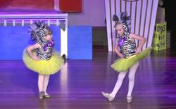 Little Zebras