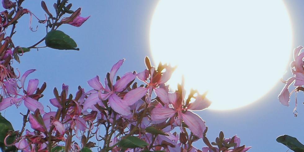 Full Moon Illumination: Bloom into Spring