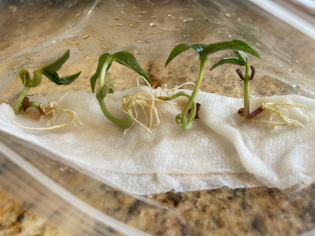 Grow Your Own Plant: Detailed Instructions