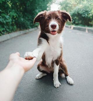 give-paw.jpg