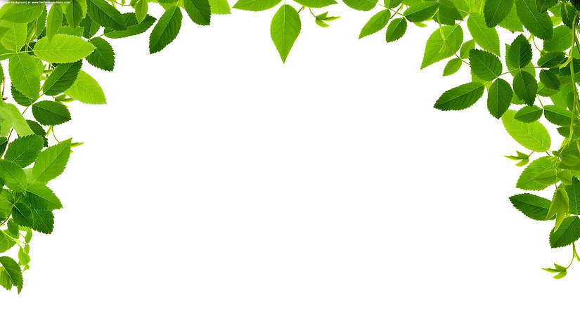 leaves-real-free-images-at-clker-com-vec
