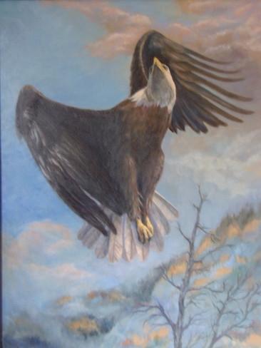 Bald Eagle over Tamarracks.jpg