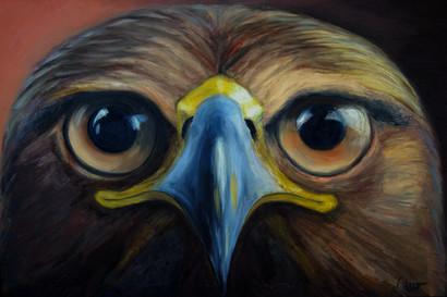 Eagle Eyes.jpeg