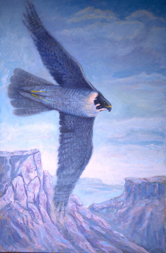 Anatum Peregrine Falcon.jpg