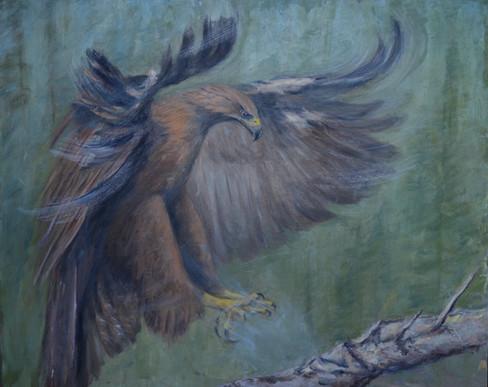 Golden Eagle Approach.jpg