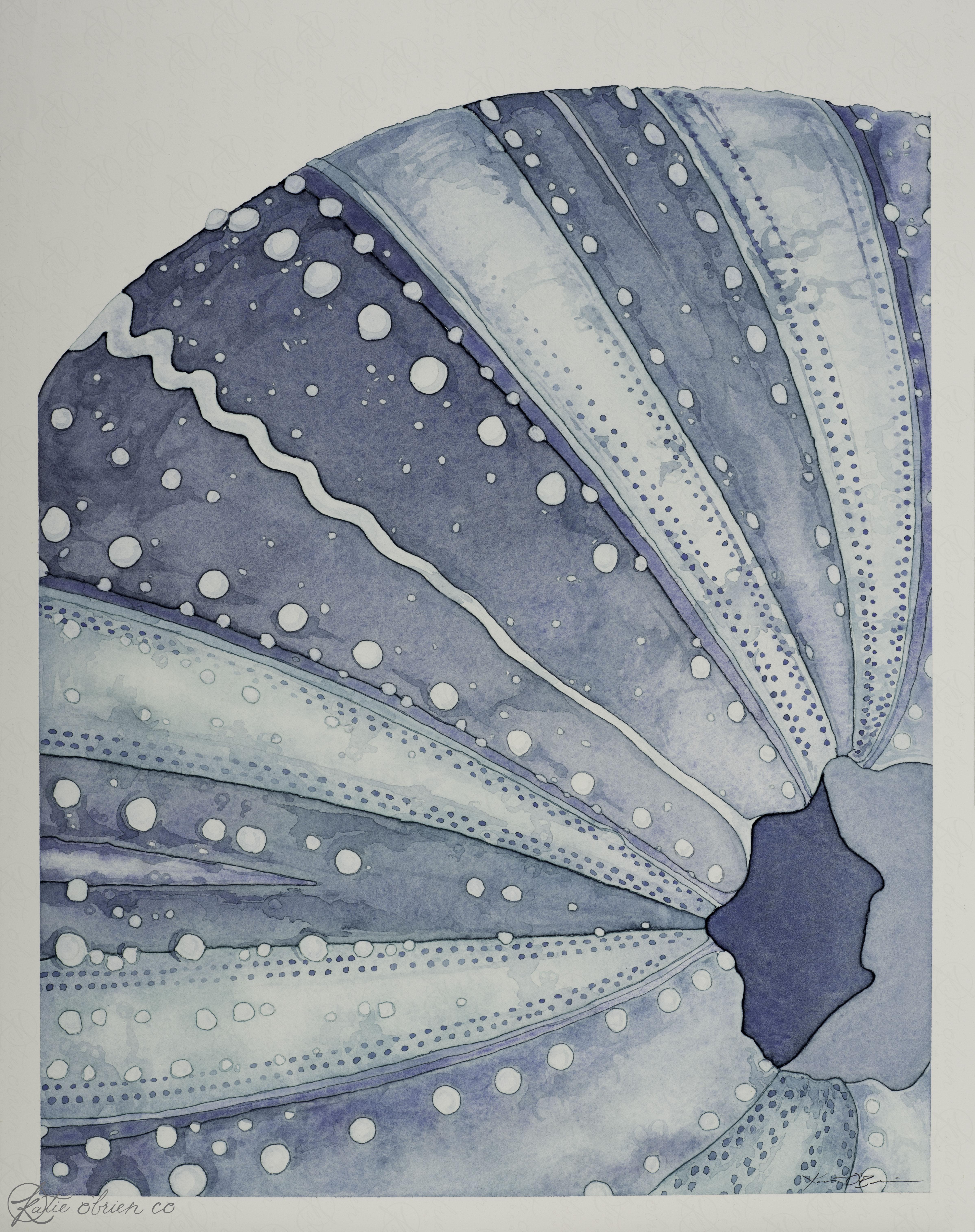 Sea Urchin - 1.jpg