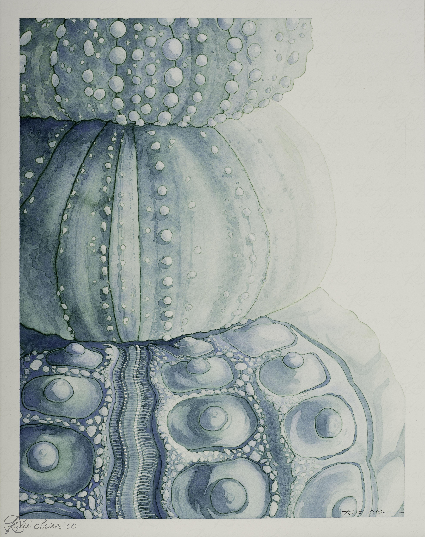 Sea Urchin - 2.jpg