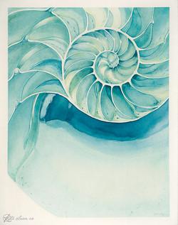 Shell - A2.jpg
