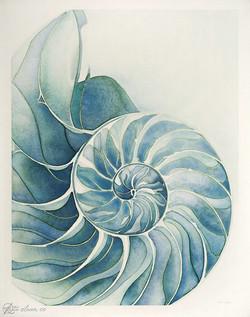 Shell - A1.jpg