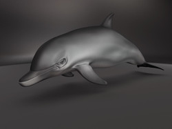 Dolphin Model and Texture