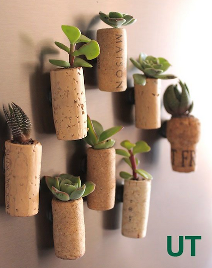 wine cork plants.png