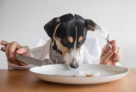 Should your dog eat table food?