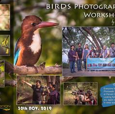 Workshop 13: Birds