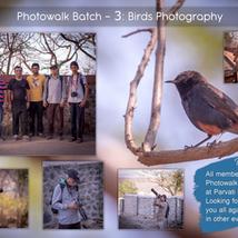 Workshop 3: Birds