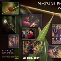 Workshop 8: Nature