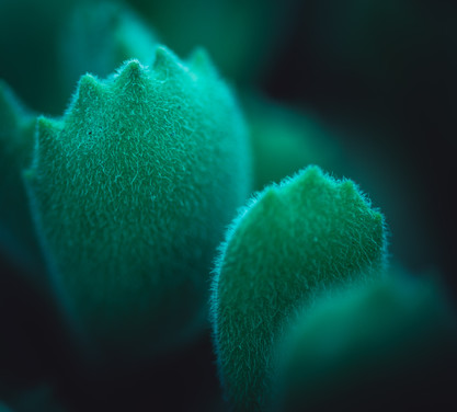 Nature-0913.jpg