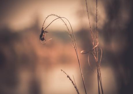 Nature-7321.jpg