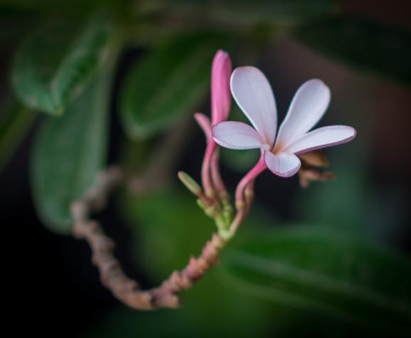 Nature-0283.jpg