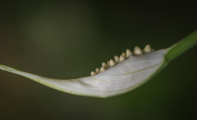 Nature-0331.jpg