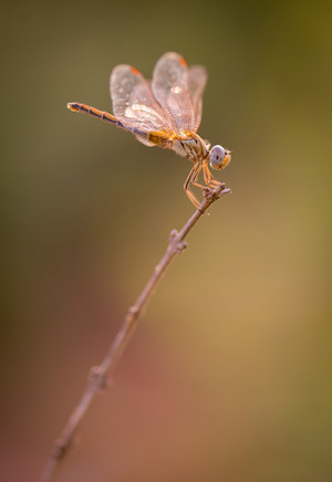 Nature-0981.jpg