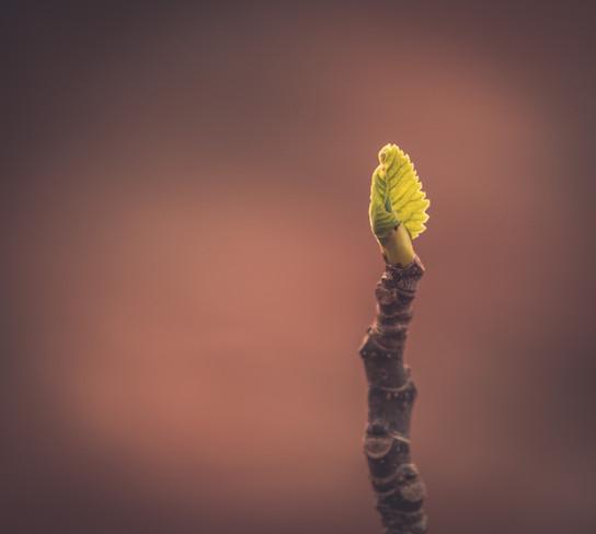 Nature-0359.jpg