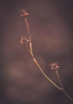 Nature-1053.jpg