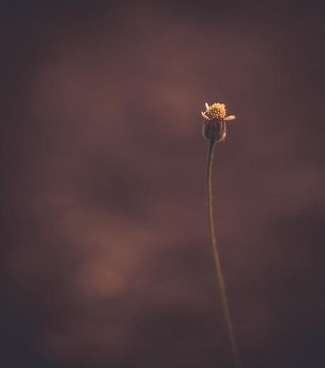 Nature-0424.jpg