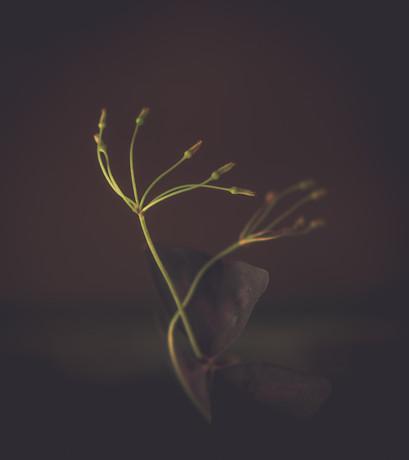 Nature-0773.jpg