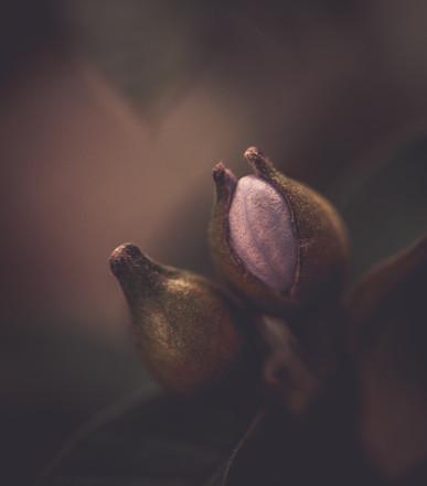 Nature-0917.jpg