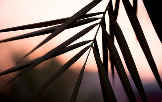 Nature-0462.jpg