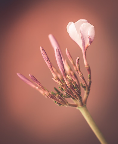 Nature-0279.jpg
