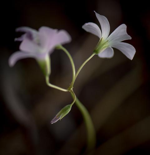 Nature-0799.jpg