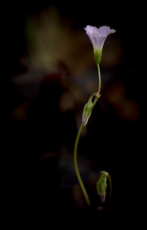 Nature-0777.jpg