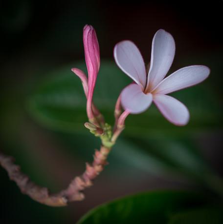 Nature-0284.jpg