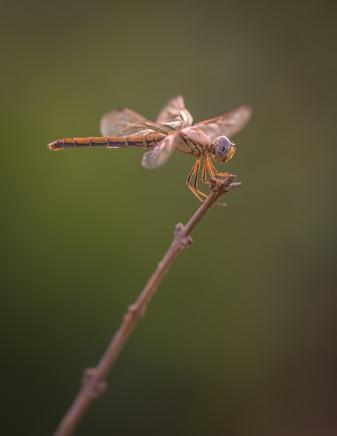 Nature-1005.jpg