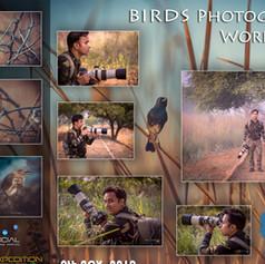 Workshop 11: Birds