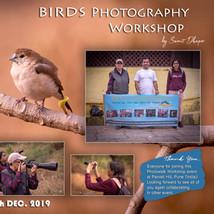 Workshop 18: Birds
