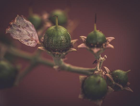 Nature-0930.jpg