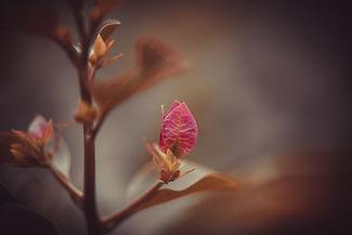 Nature-8609.jpg