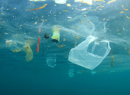 Will the ban of single-use plastic be successful?
